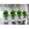 低价绿化工程|良好口碑的花木摆设绿化工程公司
