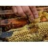 便宜的清镇市蜂蜜_优惠的梨花蜜哪里有卖