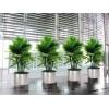 价格实惠的绿宝树,广东花木摆设绿化工程公司哪家可信赖