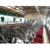 一级的畜牧场降温工程:一流的畜牧场降温工程广东提供